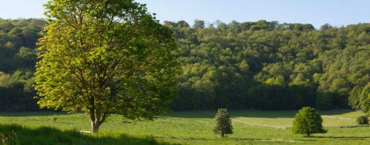 Glebe fields