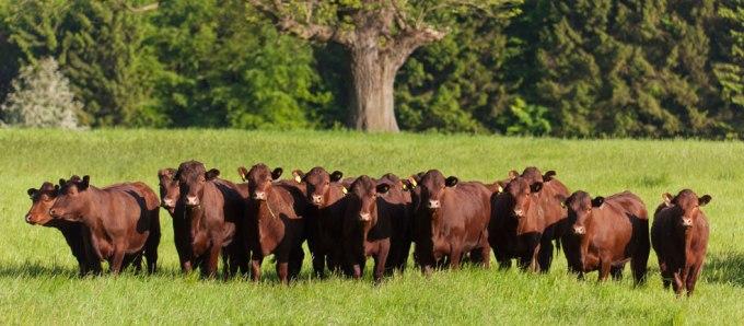 The Titsey Herd - www.titsey.org