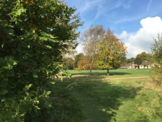 Limpsfield Common / Grub St