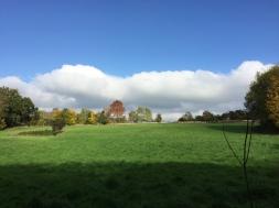 Titsey fields