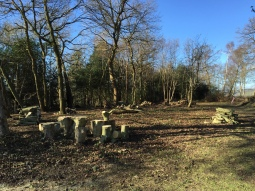 Tree clearing, Limpsfield Common