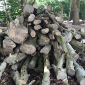 Wood on Limpsfield Common