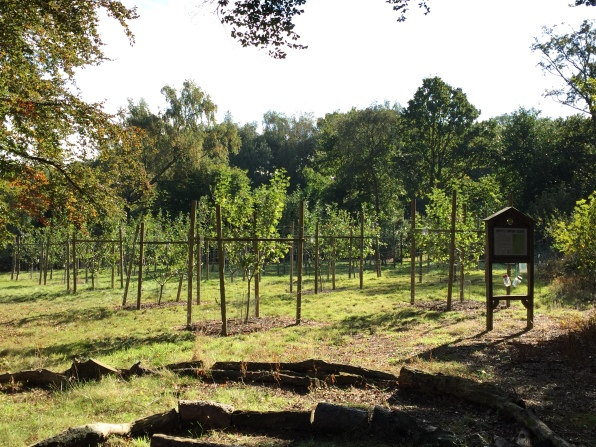 Community Orchard