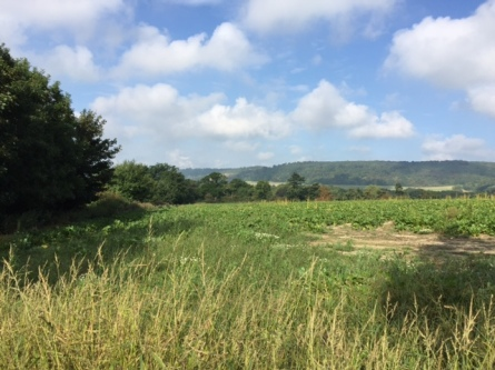 View to the Downs