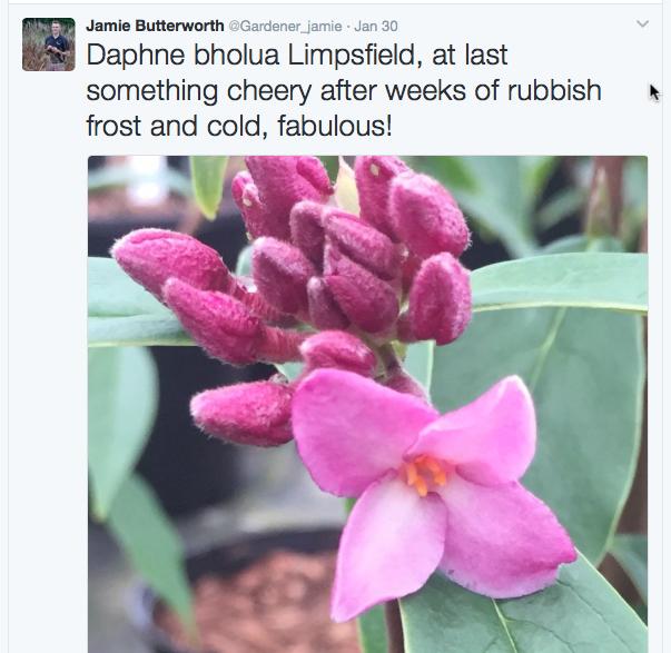 daphne-gardener-jamie-copy