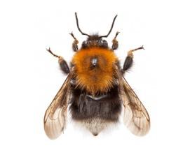 Tree-bumblebee-340