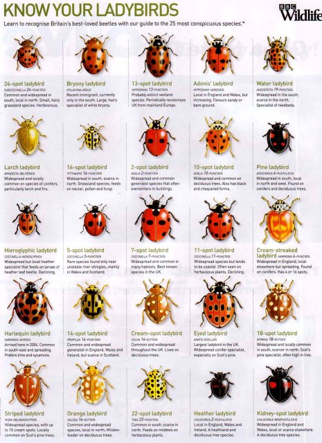 Different-Types-Of-ladybirds