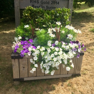 Limpsfield in Bloom