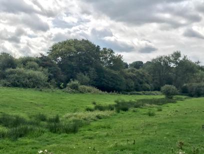 The Brook Field